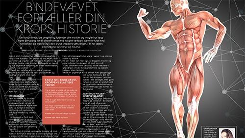 Bindevævet fortæller din krops historie