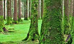 Balancetræning i skoven