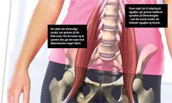 Din skjulte vej til en flad mave og sund ryg