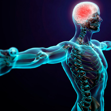 Funktionel neurologi for behandlere og trænere : Opgradering og supervision