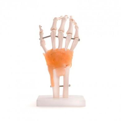 Hånd (Fuld størrelse)
