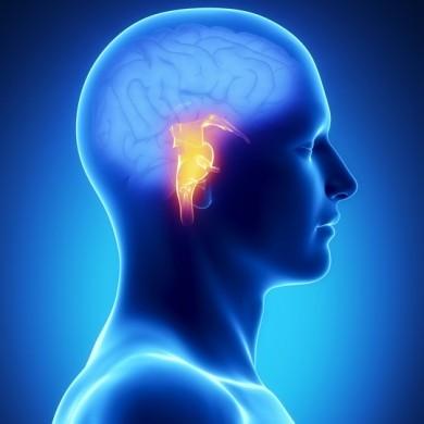 Funktionel neurologi for behandlere og trænere : Hjernestammen