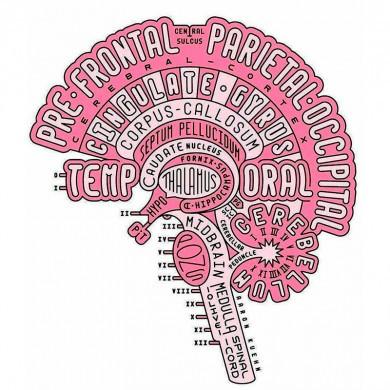 Holdtræning, Hjernebaseret træning