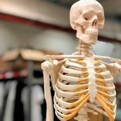 Mini skelet med bevægelige skulder- og hofteled